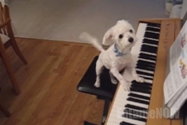ピアノ犬7