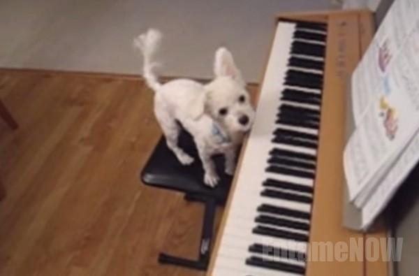 ピアノ犬1