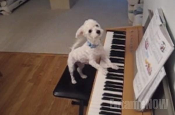 ピアノ犬6
