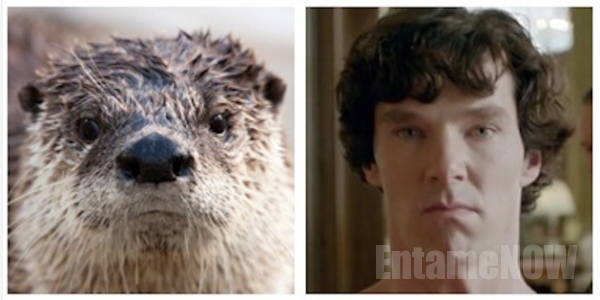 Otters-Who-Look-Like-Benedict-Cumberbatch1.jpg (650×1285)