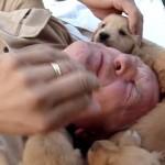 ワラワラ子犬で【キュン死確定編】かわいいかわいいゴールデンレトリバー大集合!!