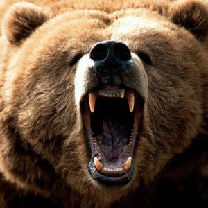 お爺さん(85)vs熊 熊を木刀で撃退