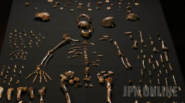 【名付け親出てこい】新種のヒト属の化石が大量に発見されるもその名前が…