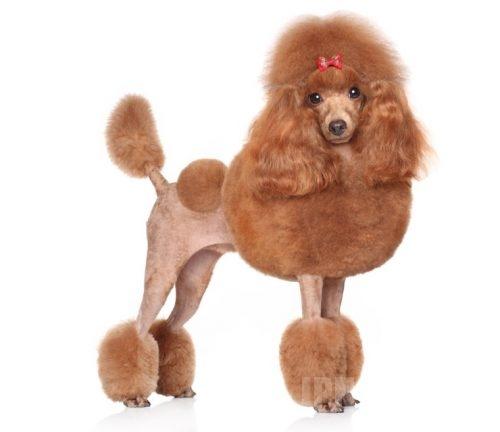 【猫よりも犬派】ペットショップが選ぶベスト3ランキング〜小犬パラダイス〜