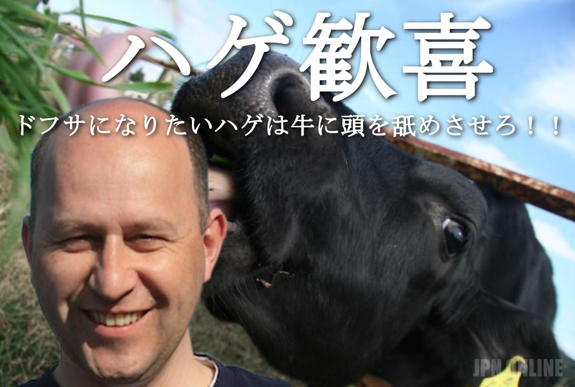 【ハゲ歓喜】ドフサになりたいハゲは牛に頭を舐めさせろ!!